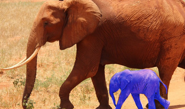 elephant-cub-tsavo-kenya-66898-large